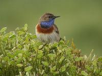 Taller en El Alcornocal: Vamos a construir un comedero para pájaros