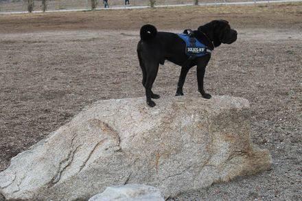 Collado Villalba estrena un parque en el que mandan los perros