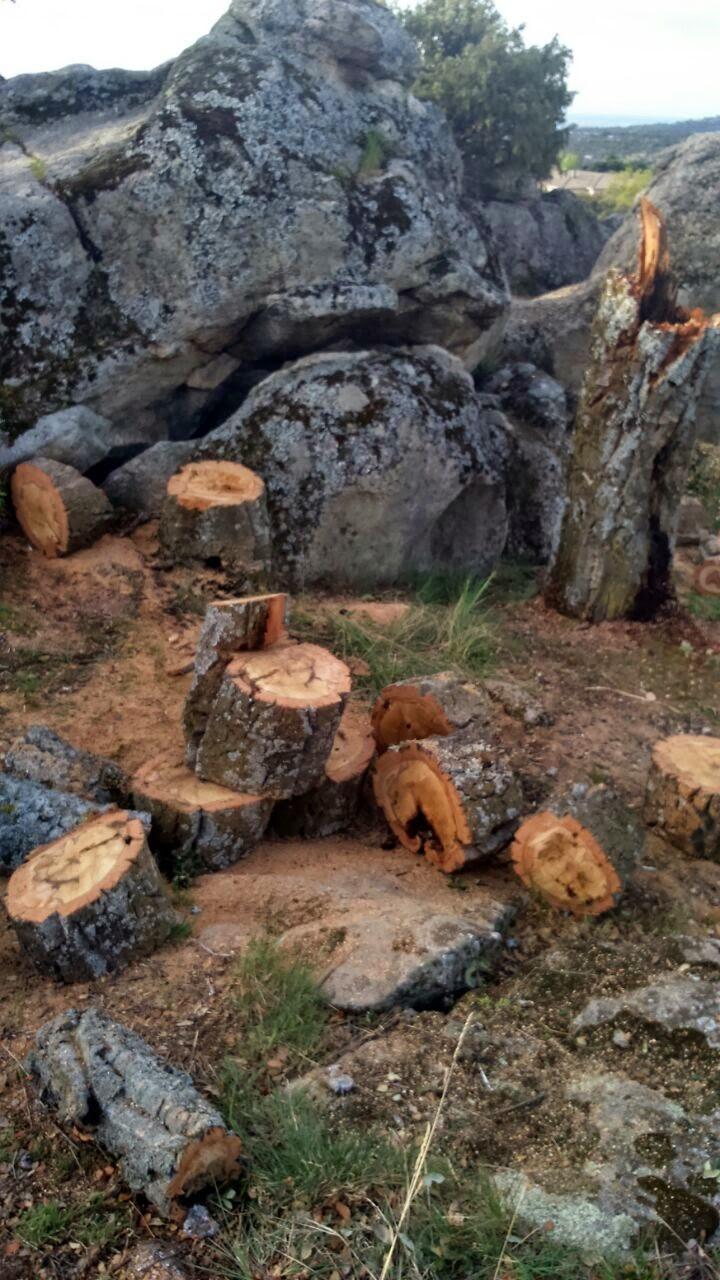 IU denuncia un nuevo arboricidio en Hoyo de Manzanares