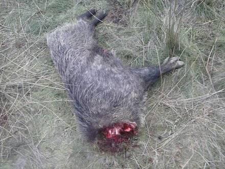 Concentración en repulsa por el maltrato a la fauna autóctona de Torrelodones