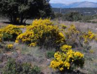 Un jardín botánico para Los Lanchares de Castilla