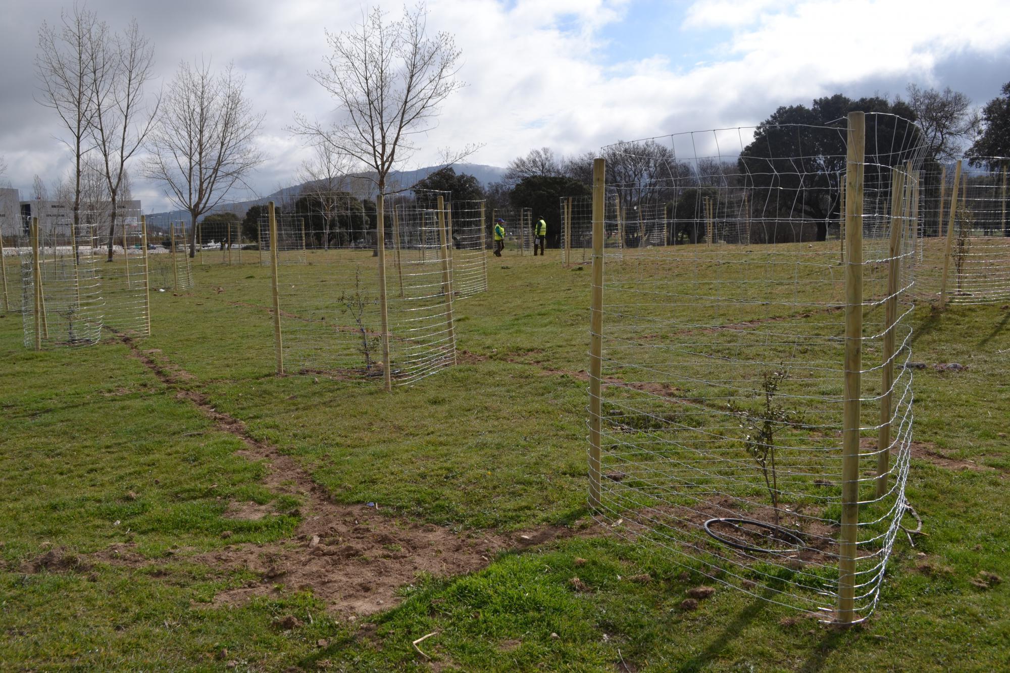 El Hospital General de Collado Villalba planta más de 1.500 árboles en zonas verdes del municipio