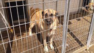 Fenixcan busca familias para casi setenta perros abandonados