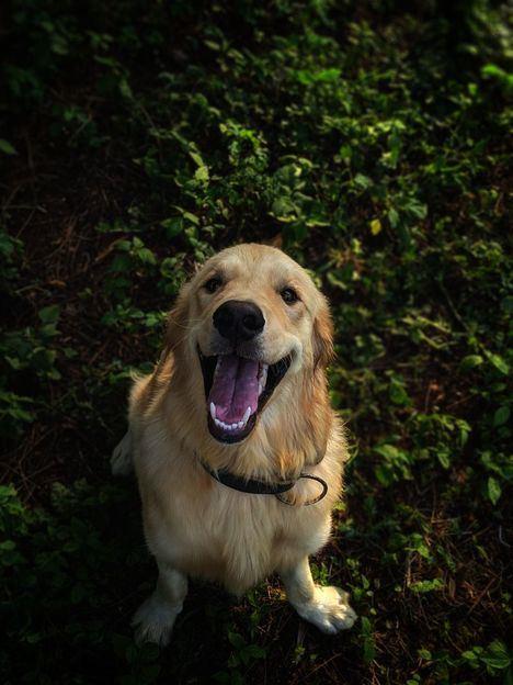 Carta al Director: Perros si, ladridos no