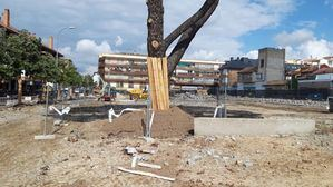 Preocupación por el arbolado de la Plaza de Los Belgas