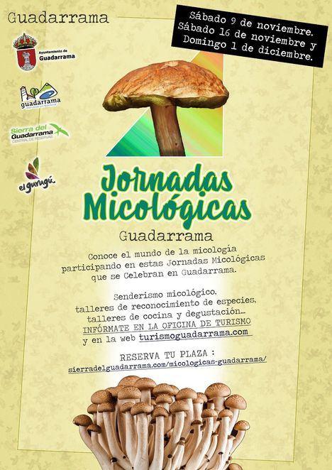 Noviembre es el mes de las setas en Guadarrama
