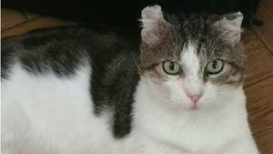 Gatos sin hogar: las 'hadas madrinas' de los gatos callejeros