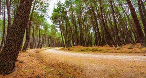 La Comunidad registró 4,2 millones de visitas en sus parques regionales en 2019