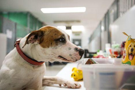 Ofrecimiento de plazas para los perros de personas sin hogar afectadas por el coronavirus