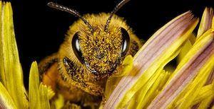 Charlas online sobre la biodiversidad de Hoyo de Manzanares
