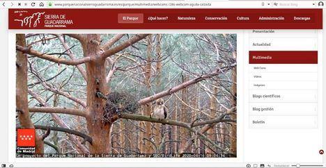 Una pareja de águilas calzadas, nuevas estrellas de 'Una ventana al Parque Nacional'