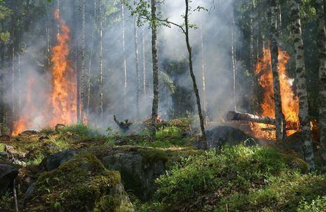 Guadarrama publica medidas de prevención para evitar incendios forestales