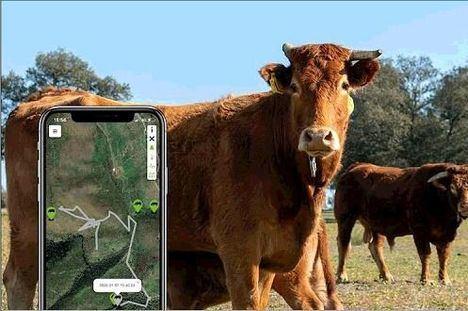 El Boalo localiza con GPS varios rebaños en un proyecto piloto de pastoreo