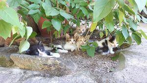 Se busca familia para 19 gatitos y cuatro gatas