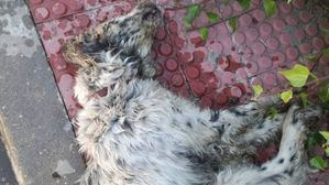Collado Villalba se personará como acusación en un grave caso de maltrato animal