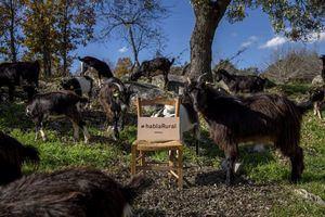 Las cabras de El Boalo, protagonistas de la campaña de Greenpeace por el Día del Orgullo Rural