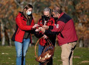 La Comunidad de Madrid regula la recogida de setas en 7.000 hectáreas del Parque Nacional