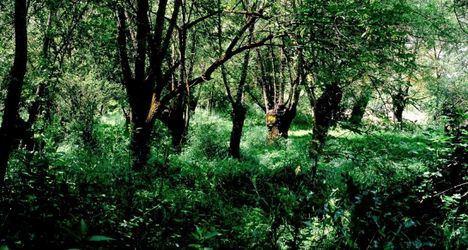 La Comunidad fomenta el uso de los Centros de Visitantes del Parque Nacional Sierra de Guadarrama