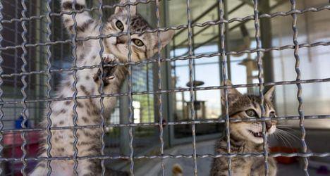 La Comunidad promueve la adopción de animales en la Feria 100 x 100 Mascota, que se celebra en IFEMA