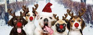 Ganas de Navidad: todas las actividades navideñas de Torrelodones, Hoyo de Manzanares, Las Rozas y Collado Villalba