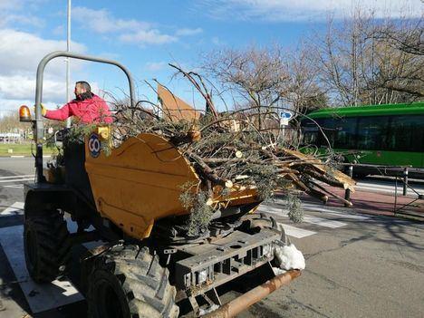 Majadahonda cifra en casi 14 millones de euros los daños del arbolado durante Filomena
