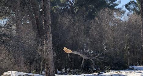 La borrasca Filomena dejó casi 4 millones de euros de daños en los montes de la región