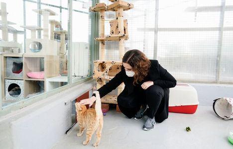 La Comunidad de Madrid adelanta las ayudas de 2021 para fomentar la protección de animales