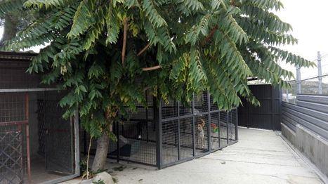 El contrato del Centro de Acogida Animal de Torrelodones lleva vencido siete meses