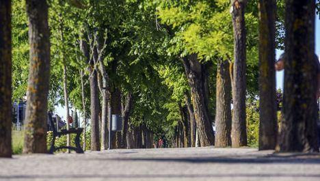 Las Rozas recibe el reconocimiento 'Tree Cities of the World' de la FAO por su gestión del arbolado urbano
