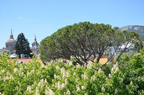 San Lorenzo propone una Ruta por sus árboles singulares para celebrar el Día Internacional de los Bosques
