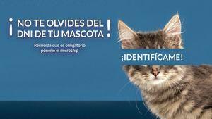 Boadilla inicia una campaña de concienciación para identificar con microchip a todos los animales de compañía