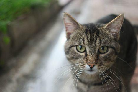 Guadarrama instalará refugios de madera para mejorar la protección de las colonias felinas callejeras