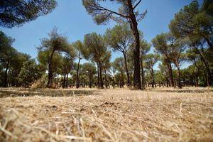 Las Rozas completará este mes de junio el desbroce de unas 350 hectáreas de terreno