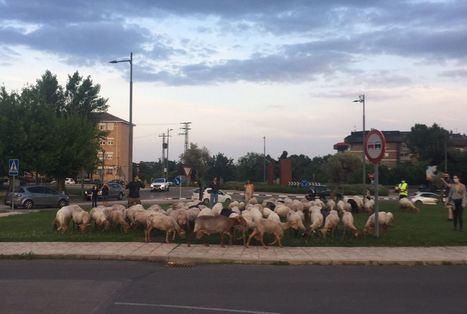 La Escuela de Pastores pasará el verano en Guadarrama, desbrozando espacios naturales y fincas municipales