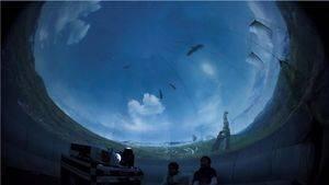 Astronomía y Biología, protagonistas en agosto en Colmenarejo