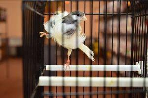 Inaugurada la exposición del III Concurso Ornitológico de la CAM