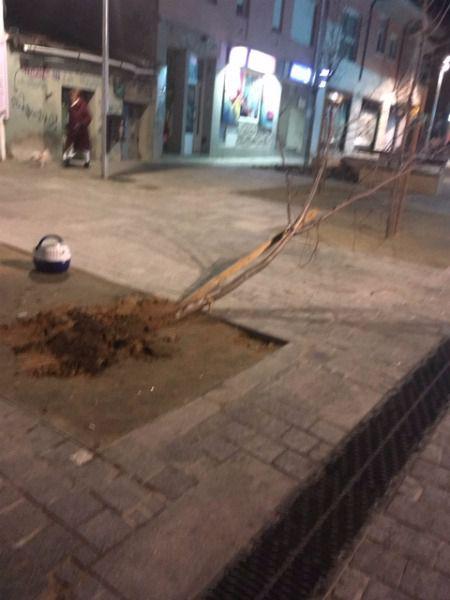 Aparece un árbol derribado