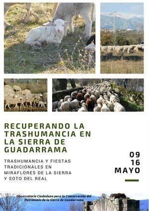 Las ovejas vuelven a la Sierra del Guadarrama con la Fiesta de la Trashumancia