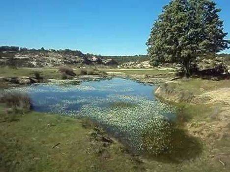 Comunidad recupera la Ranita de San Antonio de las charcas de los Camorchos