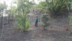 Terminan los trabajos de desbroce en 370 hectáreas de zona natural