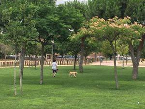 El Ayuntamiento recuerda sus obligaciones a los propietarios de mascotas