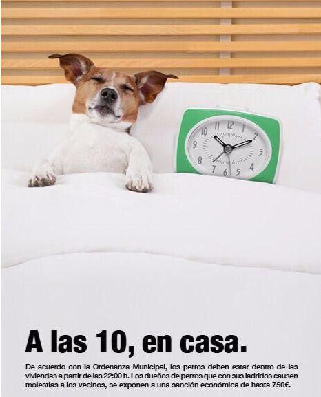 Los perros, por la noche, dentro de casa