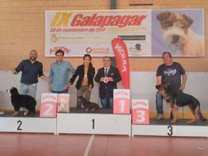 Éxito del IX Concurso Nacional canino de Galapagar