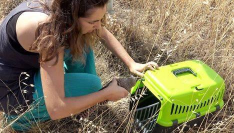 Cómo ayudar a recuperar fauna herida