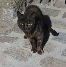 Avanza reclama la atención a gatos callejeros enfermos
