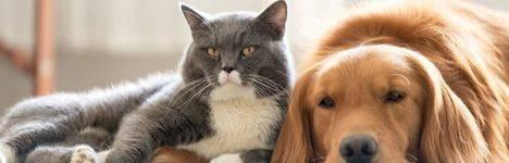 La Comunidad promueve la protección animal con el lema 'Estas navidades, mejor adopta'
