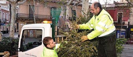 Servicio gratuito de recogida de árboles de navidad en El Escorial