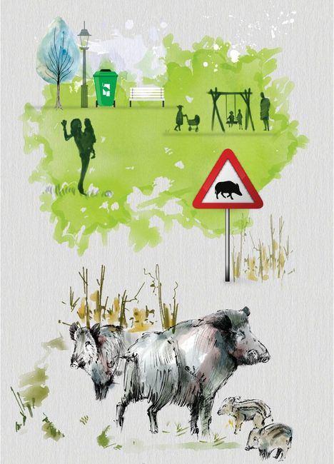 Campaña informativa por la presencia de jabalíes en zonas urbanas