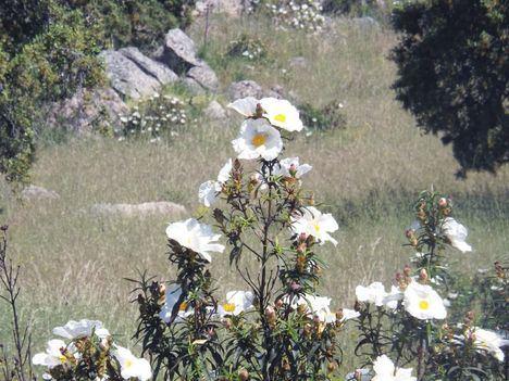 Torrelodones y Hoyo de Manzanares, Reserva de la Biosfera