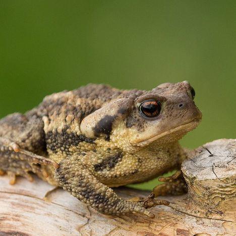 Los anfibios, grandes indicadores de calidad ambiental